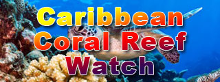 Caribbean Coral Reef Watch